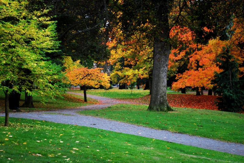 wright park, autumn