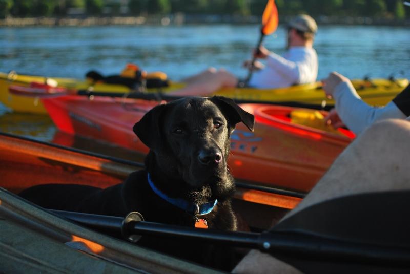 larry, kayak, dog, black lab