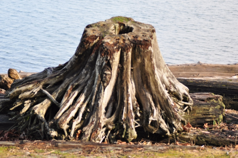 jesus, stump, ruston way, waterfront, tacoma
