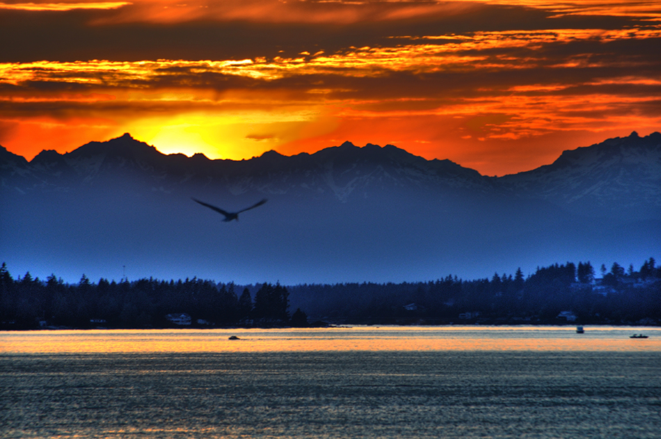 sunset, olympic mountains, tacoma, seagull