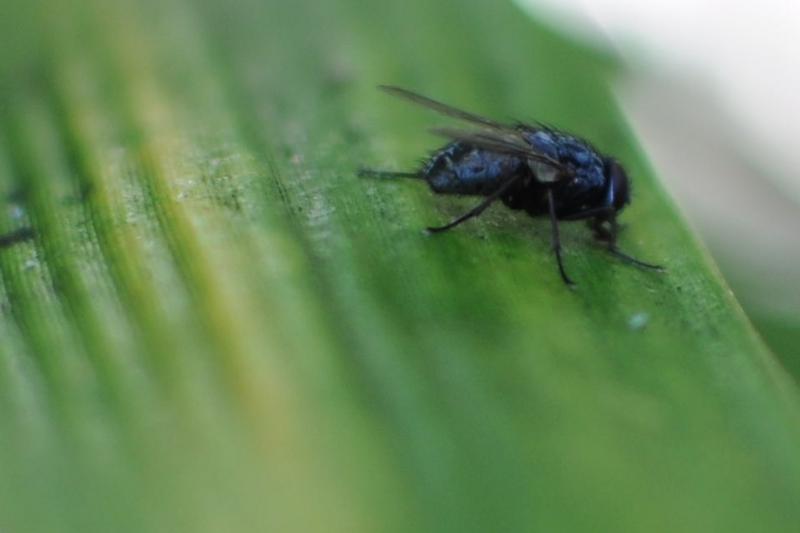 fly, bamboo