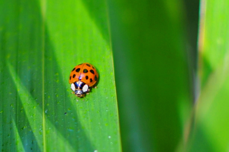 ladybug, bamboo