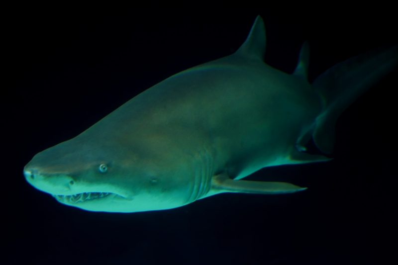 shark, north tacoma, point defiance, aquarium