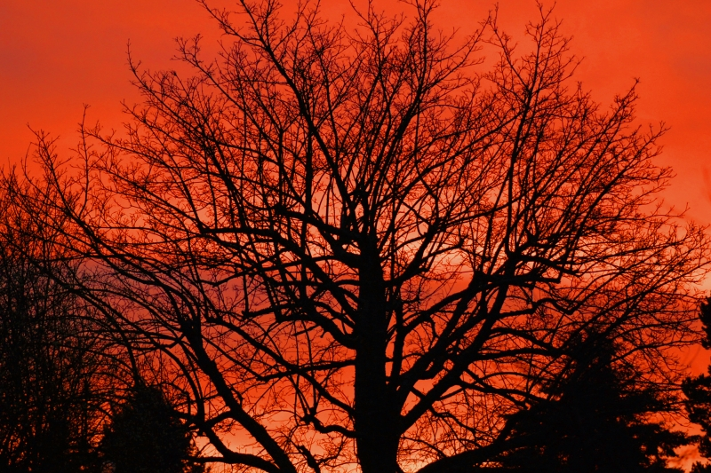 tree, sunset