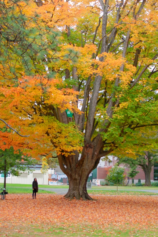 guy in a tree, wright park, fall, autumn, tacoma